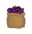 eggplant burlap bag sack of vegetables big crop vector image