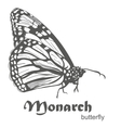 The Monarch butterfly Danaus plexippus vector image