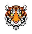 a tiger head vector image vector image