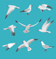 atlantic seagull in different action poses vector image