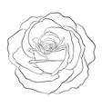 beautiful monochrome black and white rose vector image vector image
