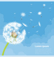 dandelion seeds blowing away on the wind vector image vector image