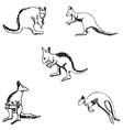 Kangaroo A sketch by hand Pencil drawing vector image vector image