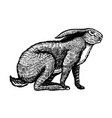 wild hare or brown rabbit sits european bunny or vector image vector image