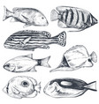 collection hand drawn exotic fishes vector image vector image