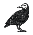 Crow tattoo vector image