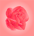 Flower pink rose symbol of love vector image vector image