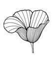 hand drawn decorative poppy vector image