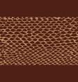snake skin brown vector image