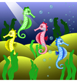 Beautiful seahorses at the bottom of the sea vector image vector image