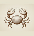 crab painted in engraving style vector image vector image