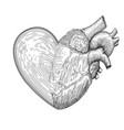 heart symbol with half real human heart together vector image vector image