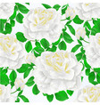 seamless texture white rose and leaves with buds vector image vector image