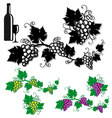 grapes with vine leaves vector image