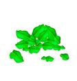A Heap of Fresh Kaffir Lime Leaves vector image vector image