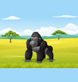 cartoon gorilla in the savanna landscape vector image