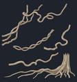 liana branches set vector image