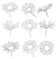 set of drawing daisy flowers vector image vector image
