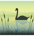 swan on water vector image vector image