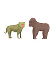 baboon monkey and gorilla cartoon vector image