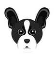 cute boston terrier dog avatar vector image vector image