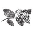 Mayflower vintage engraving vector image vector image