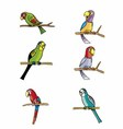 Set of Parrots Isolated on White vector image vector image