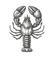 drawing lobster for menu or label seafood in vector image