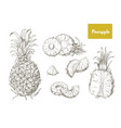 set naturalistic drawings whole and cut vector image vector image