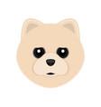 cute pomeranian dog avatar vector image