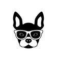 portrait of french bulldog with glasses vector image