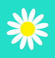 white daisy chamomile flower icon cute plant vector image