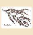 eucalyptus leaves hand drawn vector image