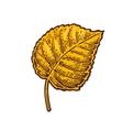 Linden leaf color vintage engraved vector image vector image