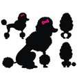 poodle dog silhouettes vector image