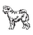 decorative standing portrait of pumi dog vector image vector image