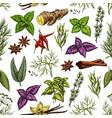 organic herbs and spice seasonings sketch pattern vector image