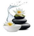 water lily flowers and zen stone bowl with water vector image vector image