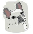 head of french bulldog vector image