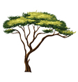 african tree vector image