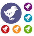 chick icons set vector image vector image
