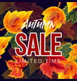 colorful autumnal sale banner vector image vector image