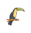 exotic hawaiian tropical bird tukan advertising vector image