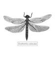 macro detailed hand drawn dragonfly vector image vector image