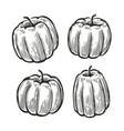 pumpkin set sketch vegetables food vintage vector image