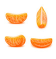 realistic detailed 3d tangerine slices set vector image