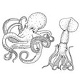sea creature octopus and squid calamari engraved vector image vector image