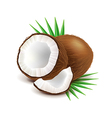 Coconut and slice isolated on white vector image vector image
