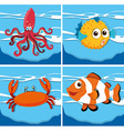 different kind sea animals vector image vector image