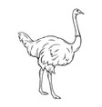 outline ostrich icon vector image vector image